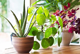 Houseplants can hydrate your skin in the winter