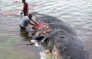 Indonesia: dead whale had 1,000 pieces of plastic in stomach