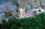 Why is the Amazon rainforest on fire?-  iWONDER