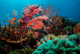 Marine life under threat from plummeting oxygen levels
