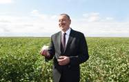 President Ilham Aliyev views cotton sowing process in Hajigabul district