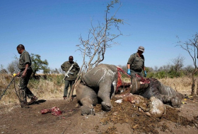 The criminals making millions from illegal wildlife trafficking - TOP SECRET